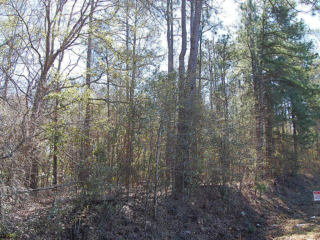 Large Treed Lot in Americus - Image 4