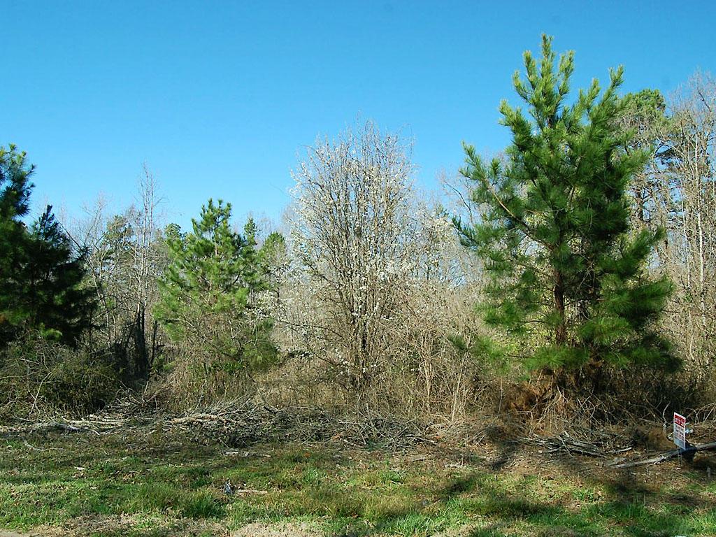 Scenic Georgia Acreage Near the South Carolina Border - Image 0