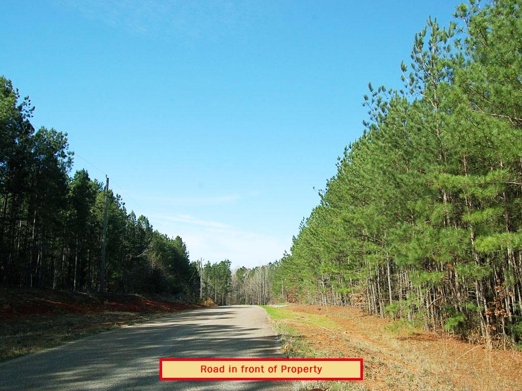 Gorgeous 2 Acres Outside of Woodbury - Image 4