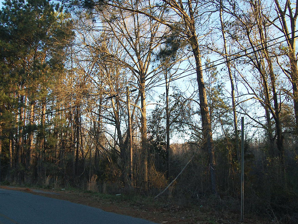 Near Full Acre of Creekside Property - Image 4