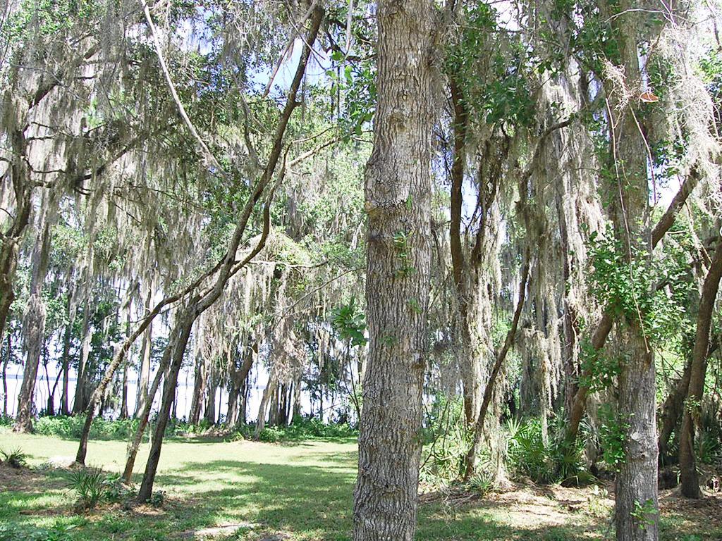 Crescent Lake Florida Lakefront Property - Image 5