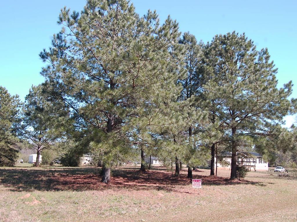 Nearly 3 Quarters of an Acre in Beautiful Peach State - Image 4