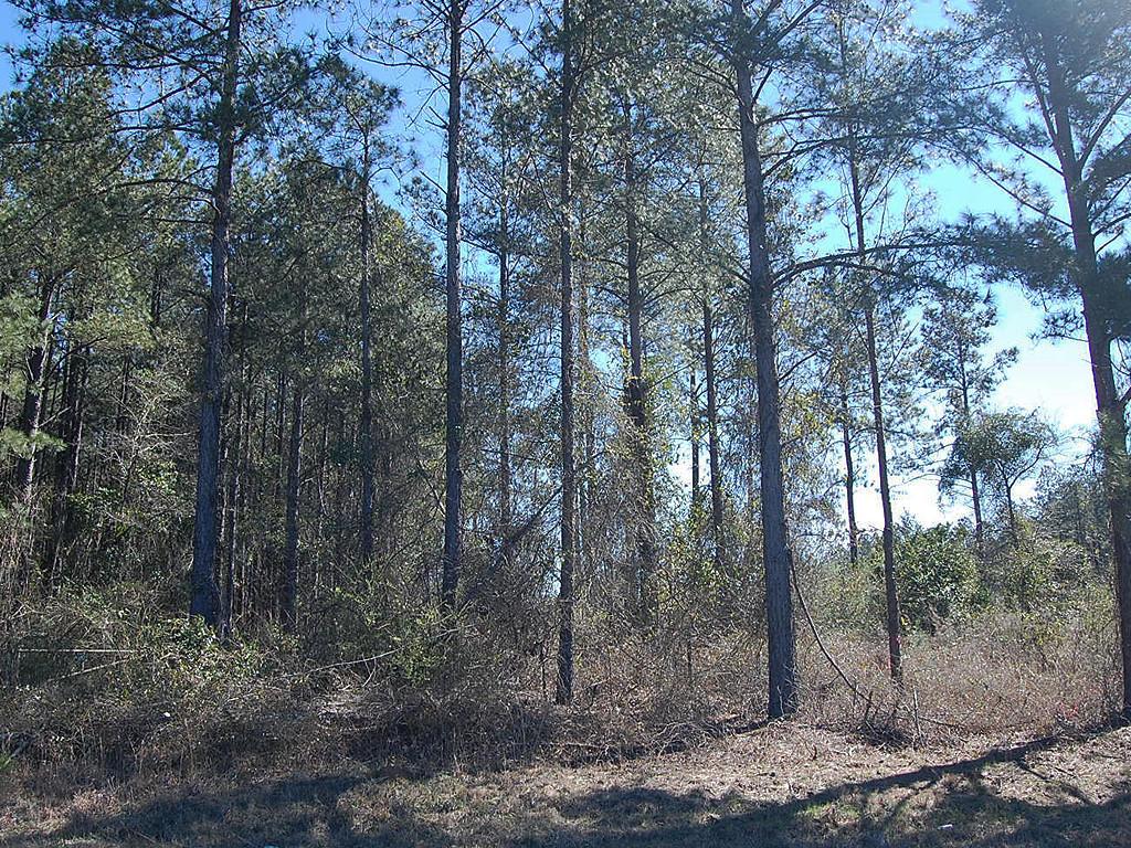 6 Acres North of Louisville Georgia in Jefferson Pines - Image 3