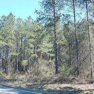 6 Acres North of Louisville Georgia in Jefferson Pines - Image 0