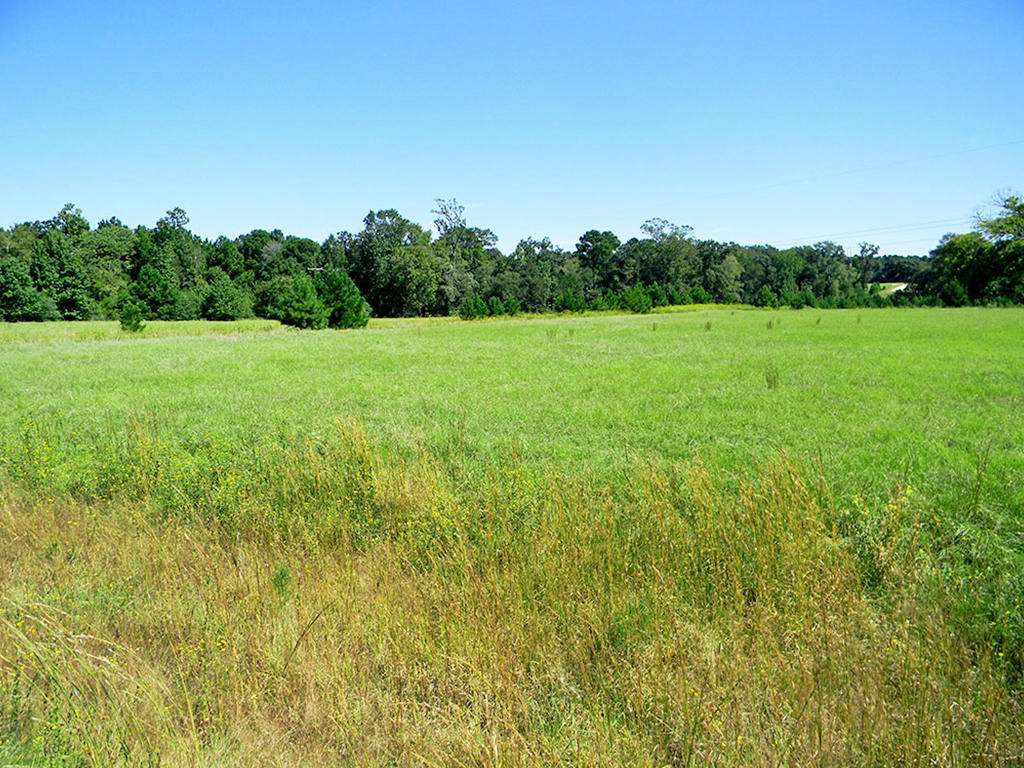 Perfect Acre for Living in the Texas Countryside - Image 4