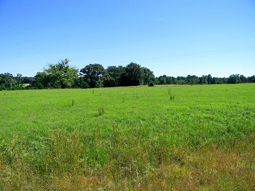 Perfect Acre for Living in the Texas Countryside - Image 5