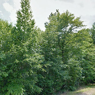 Gorgeous 1 Acre Lot with a Gentle Creek - Image 0