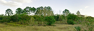 Beautiful 1 Acre Lot in Sunshine State