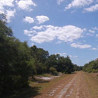Rich Land Opportunity Near Florida Coast - Image 1
