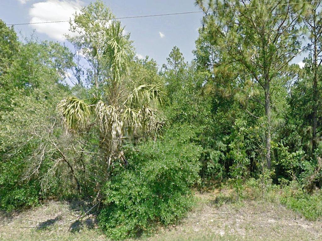 Beautiful Half Acre Near Florida Coast - Image 3