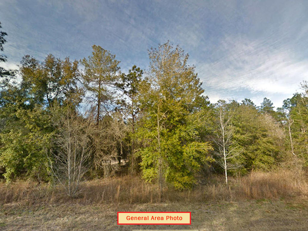 Almost An Acre of Land in Small Florida Community - Image 3