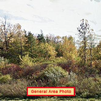 Beautiful Property Near Lake Ontario - Image 1