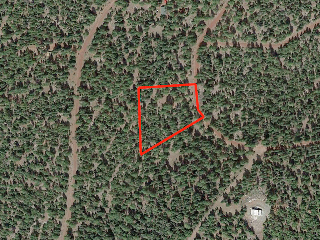 Double Wooded California Pines Lot - Image 2