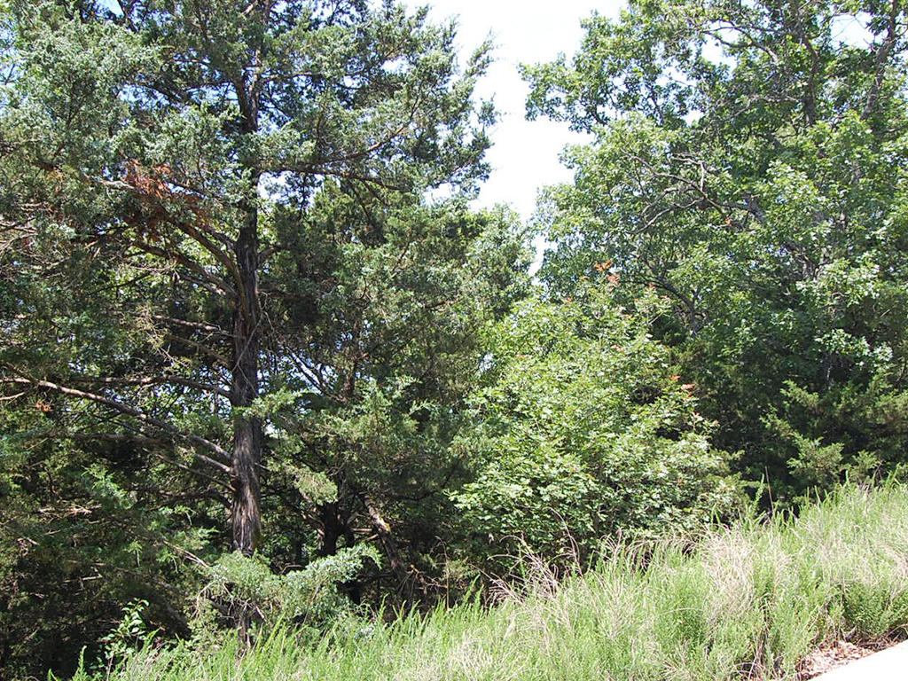 Stunning Land Opportunity Near Table Rock Lake - Image 4