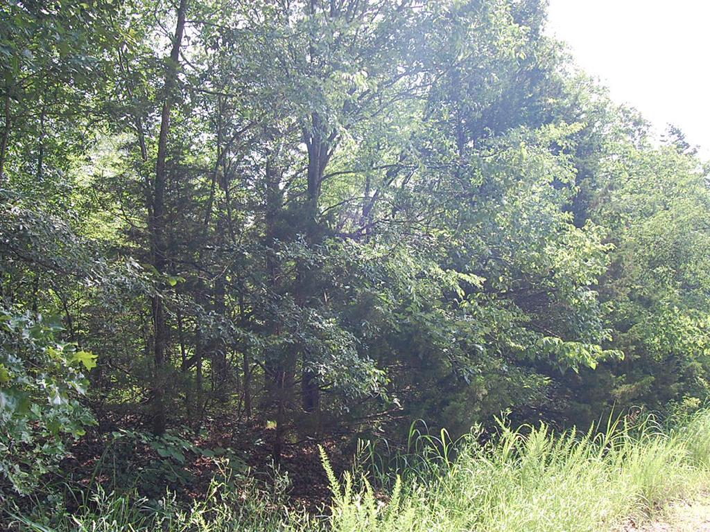 Country Gem Near Lake Toneycomo - Image 3