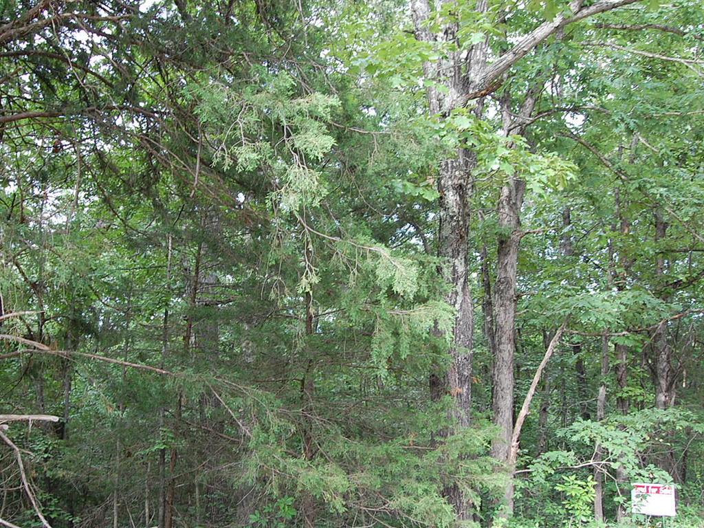 Treed property surrounded by lakes - Image 5