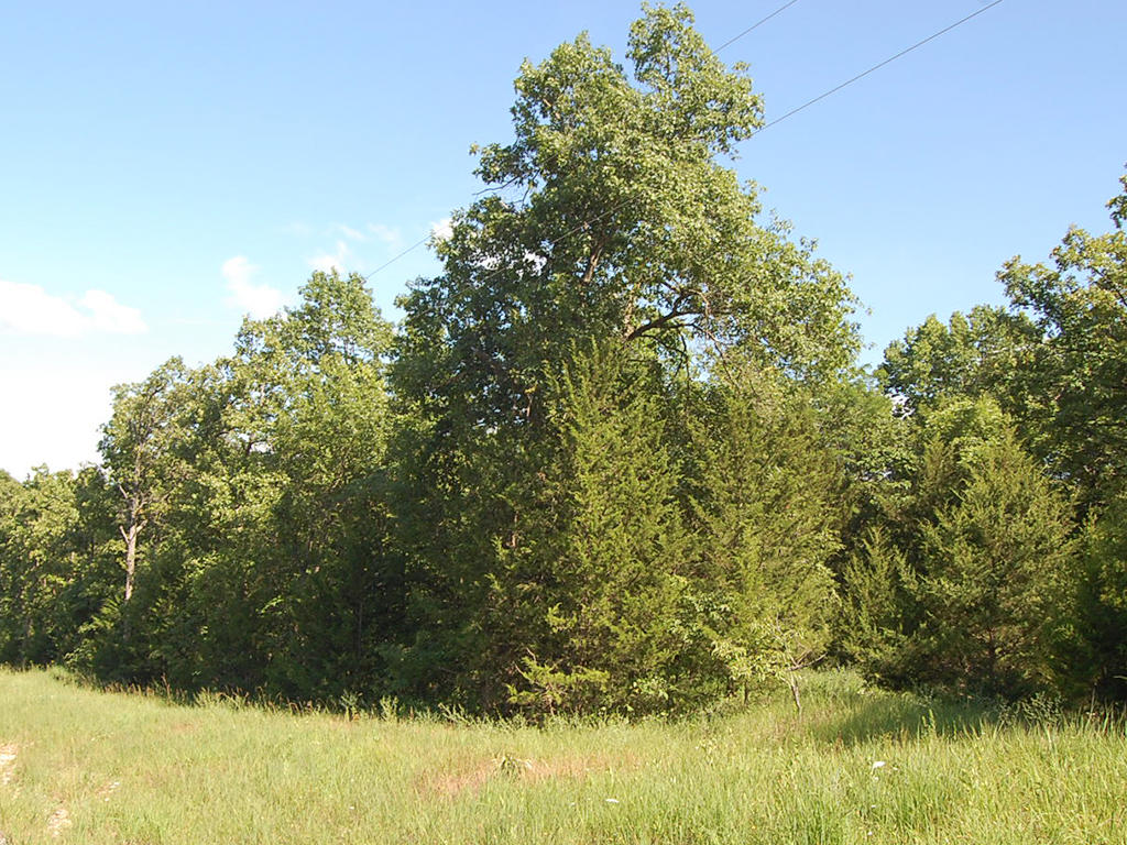 Spacious 2+ Acres of Private Land in Gated Community - Image 4