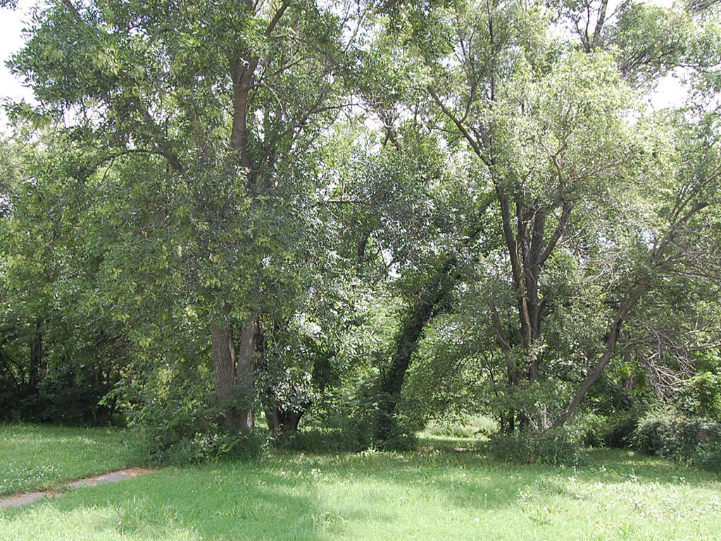 Near Half Acre Near Council Grove Lake - Image 5