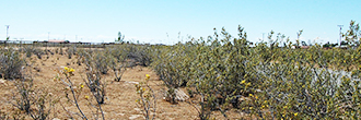 Paved Road Access to this Half Acre California Lot