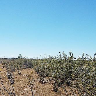 Paved Road Access to this Half Acre California Lot - Image 1