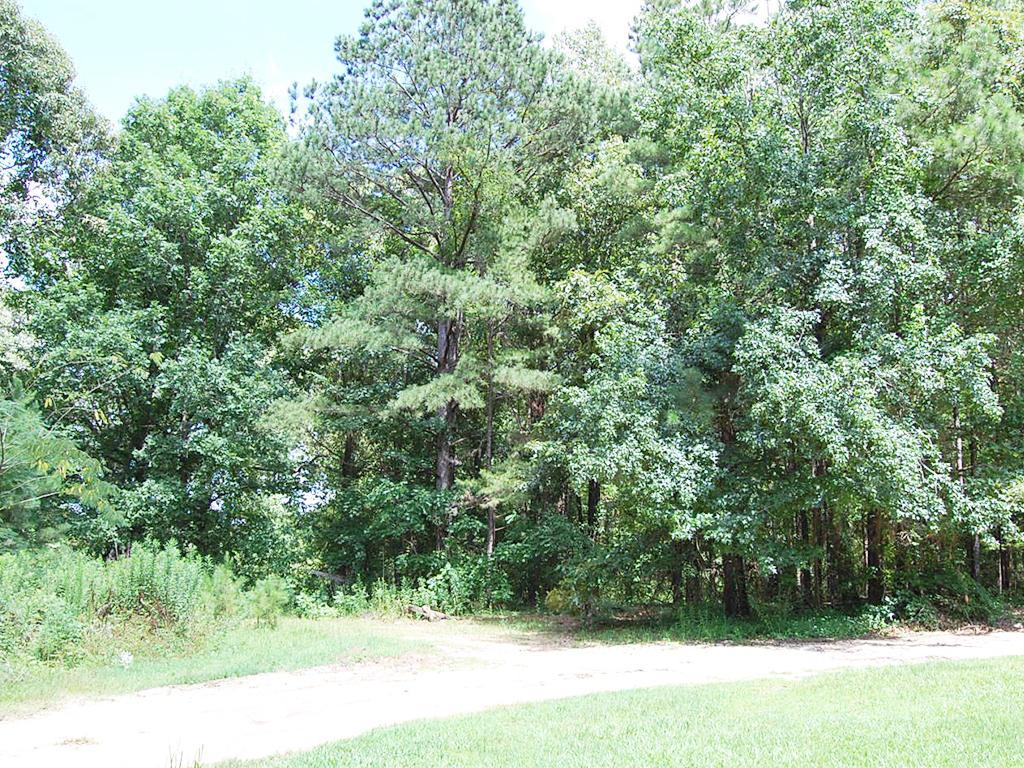 Beautiful 1 Acre Parcel in Quiet Neighborhood - Image 3