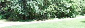 Beautiful 1 Acre Parcel in Quiet Neighborhood