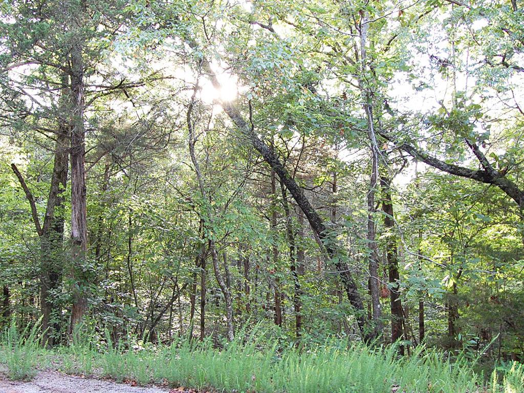 Embrace Tranquil Living Near Thunderbird Lake - Image 4