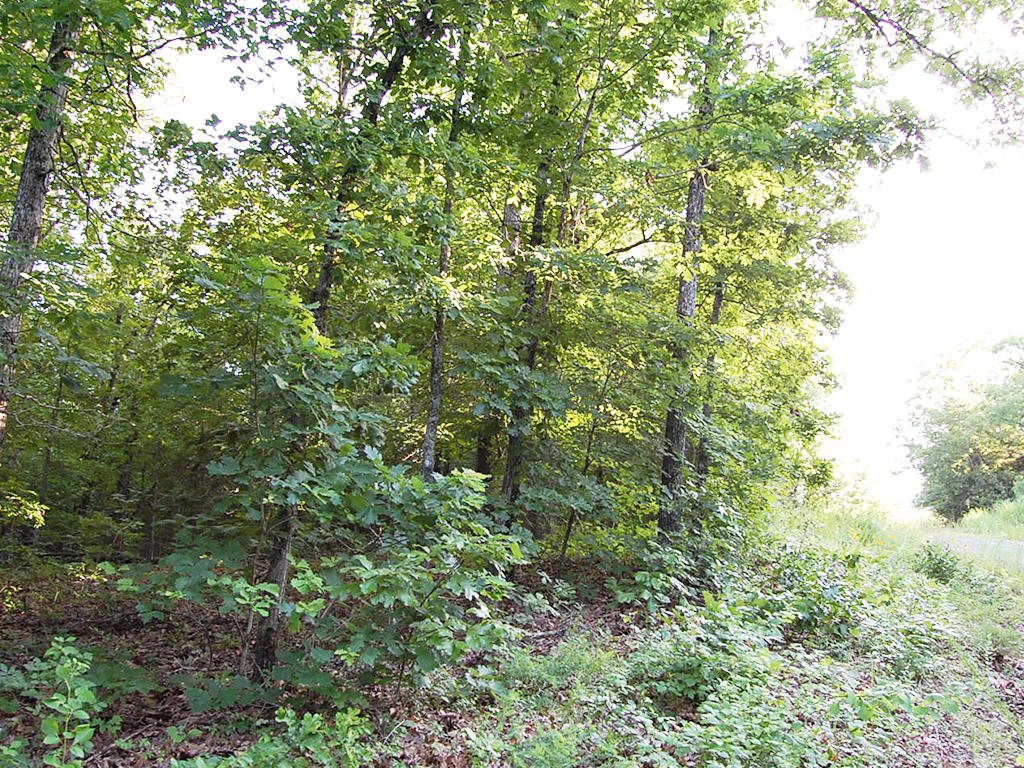 Private Half Acre a Mile From Lake Thunderbird - Image 4