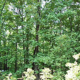 Serene Living Near Arkansas Ozarks - Image 1