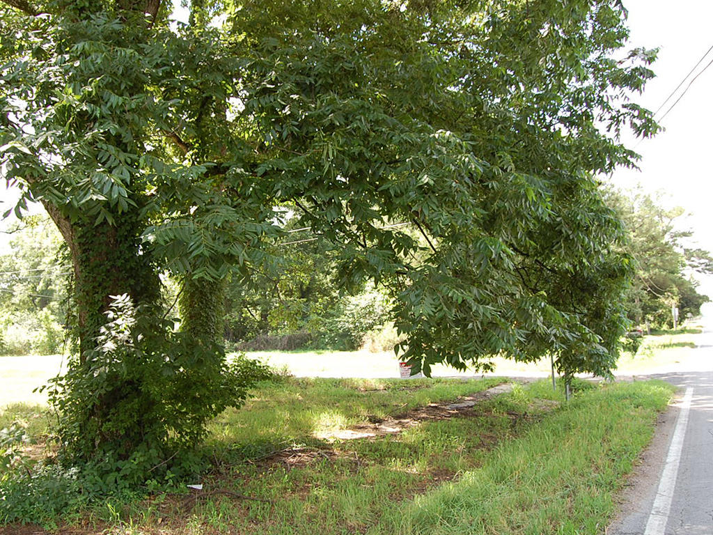 Rural Arkansas Residential Property - Image 4