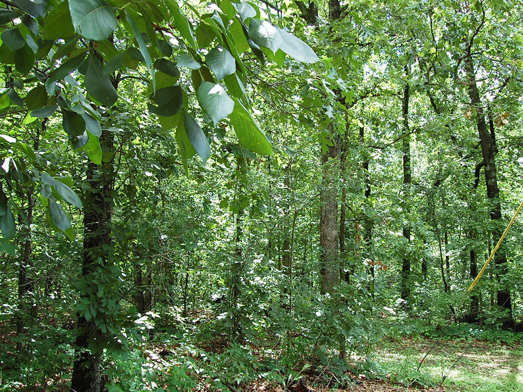 Scenic Arkansas Parcel in Recreational Community - Image 5