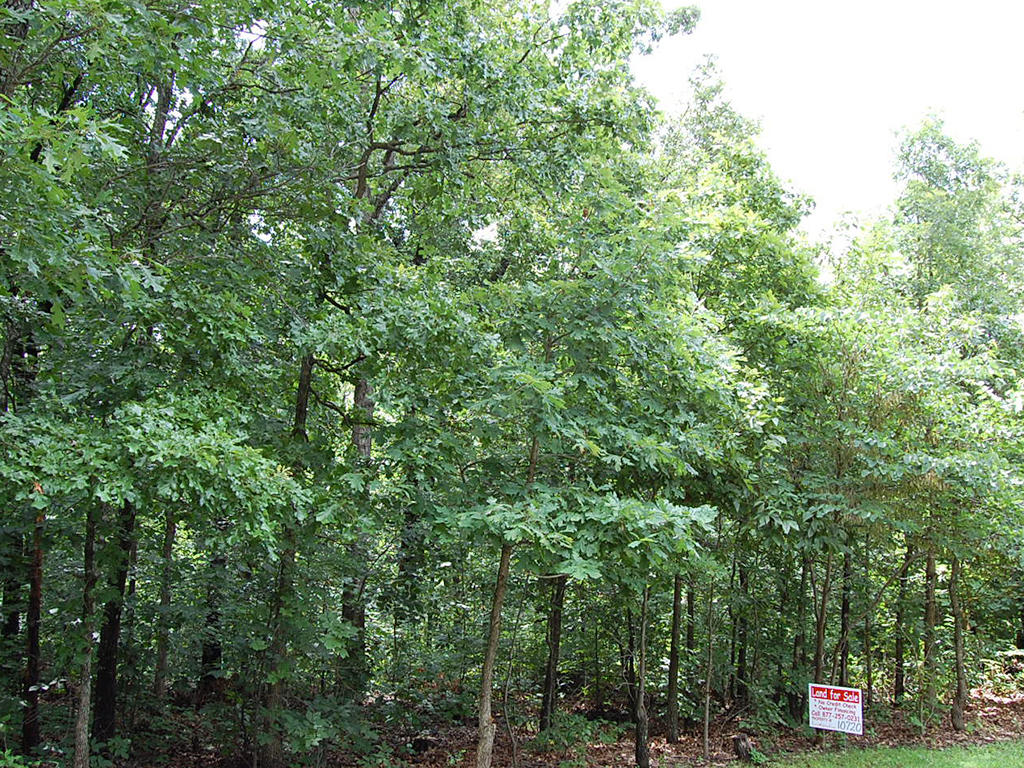 Scenic Arkansas Parcel in Recreational Community - Image 0