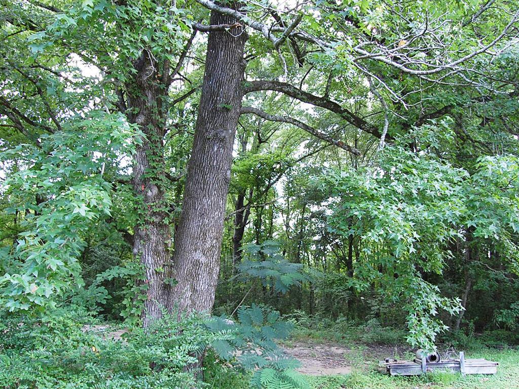 Vast Cheap Carthage Arkansas Homesite - Image 3