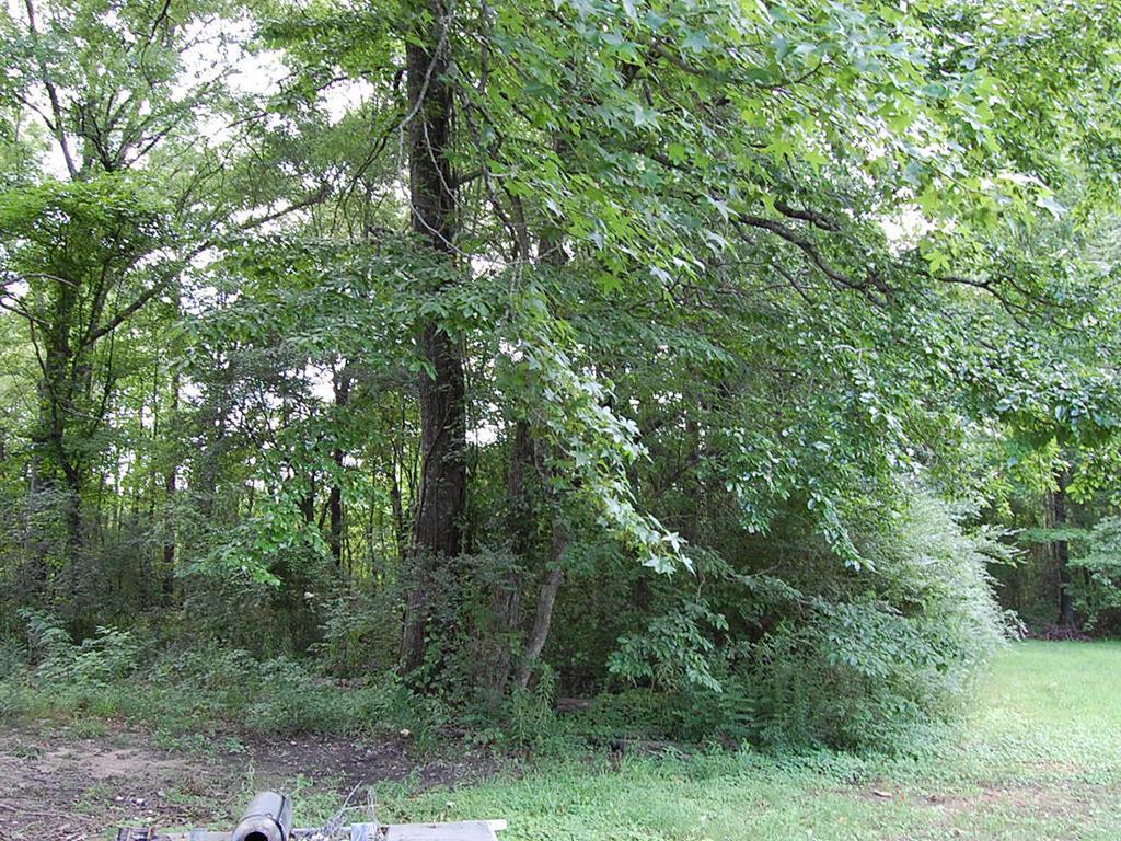 Vast Cheap Carthage Arkansas Homesite - Image 0