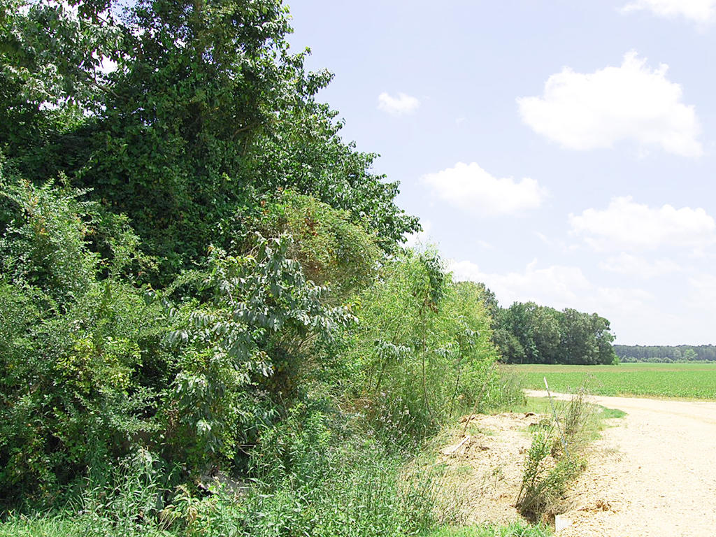 Almost an Acre Near Hamburg - Image 1