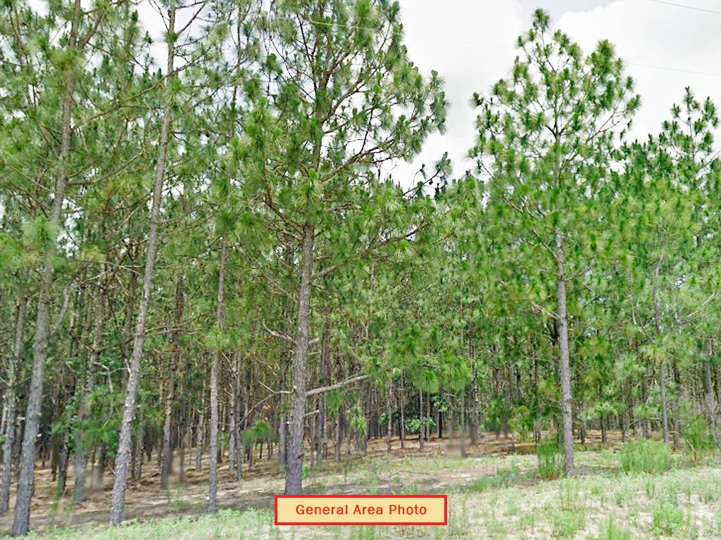 Uniquely Located Quarter Acre of Florida Land - Image 3