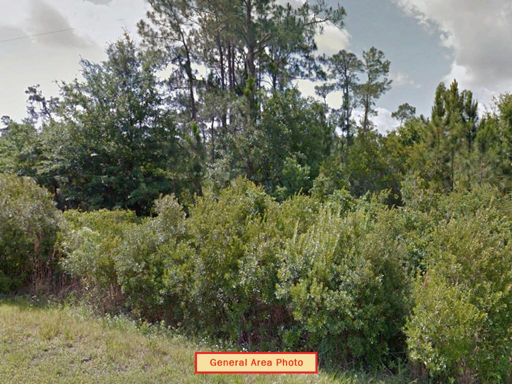Quarter acre lot in Avon Park - Image 3