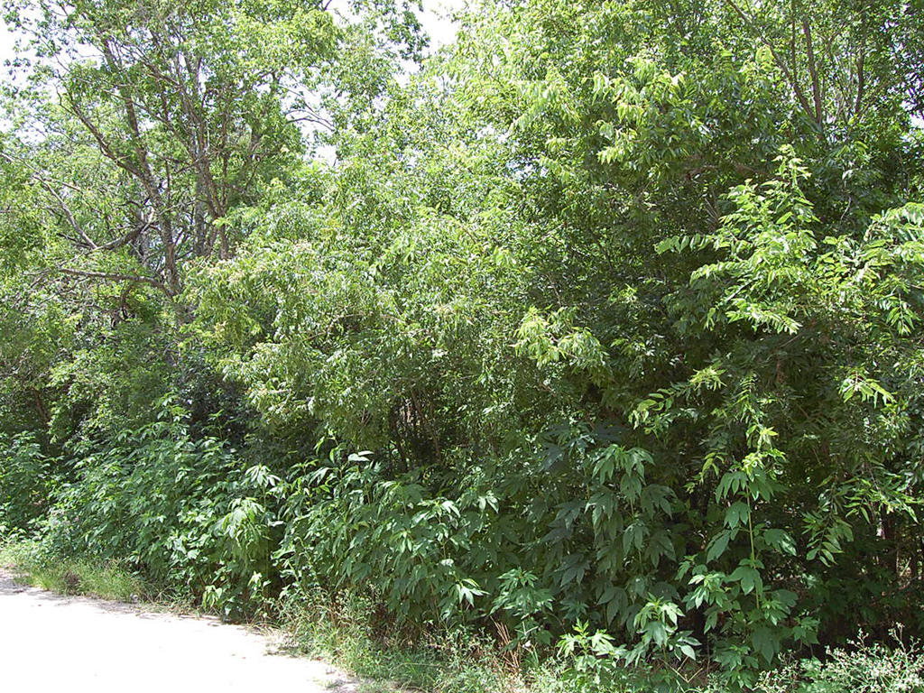 Treed City Lot in Eastern Texas - Image 4