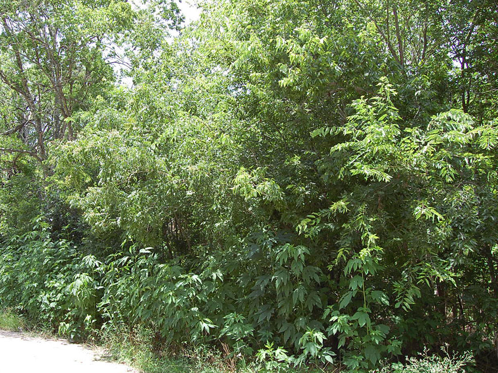 Treed City Lot in Eastern Texas - Image 1