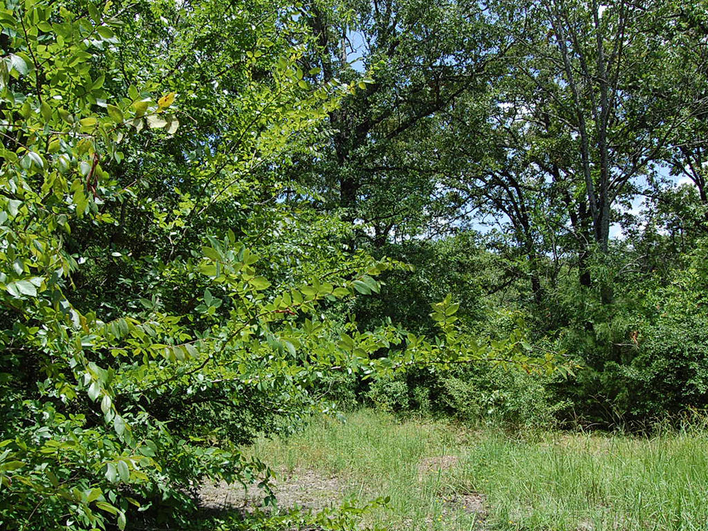 Woods Lake Double Lot Homesite - Image 3