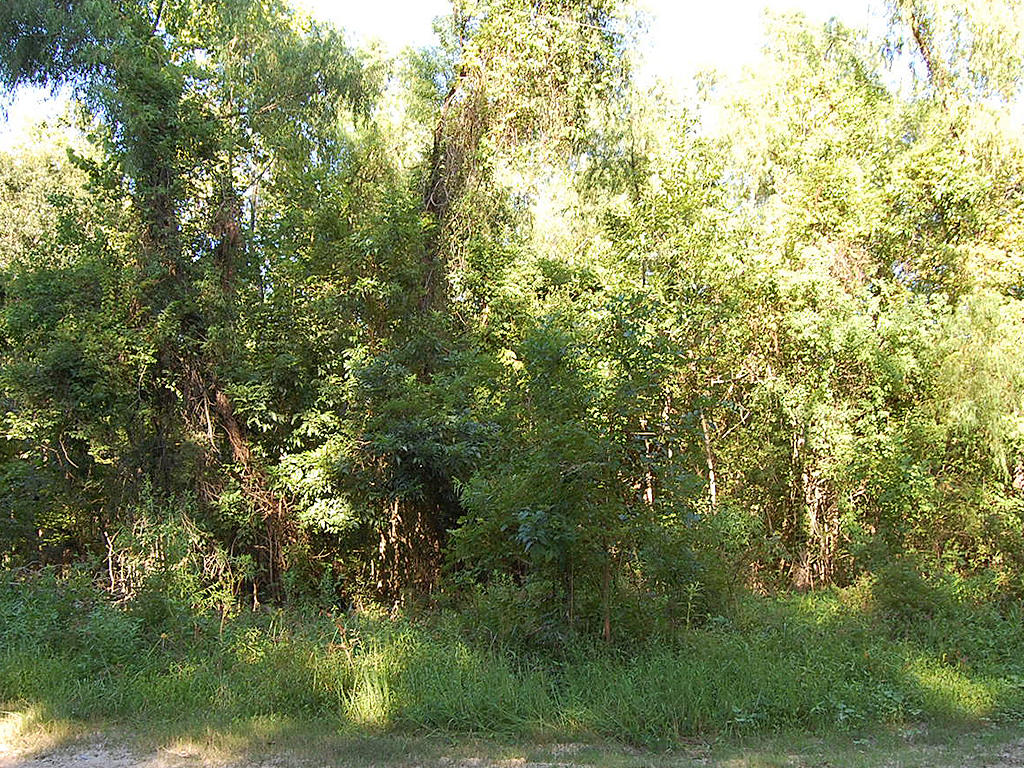 Just Over Quarter Acre Trinity River Lot - Image 4