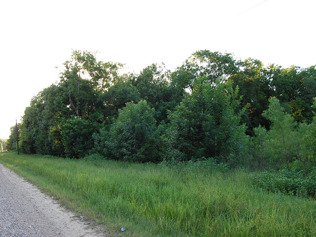 Wooded Property with Power Available - Image 4