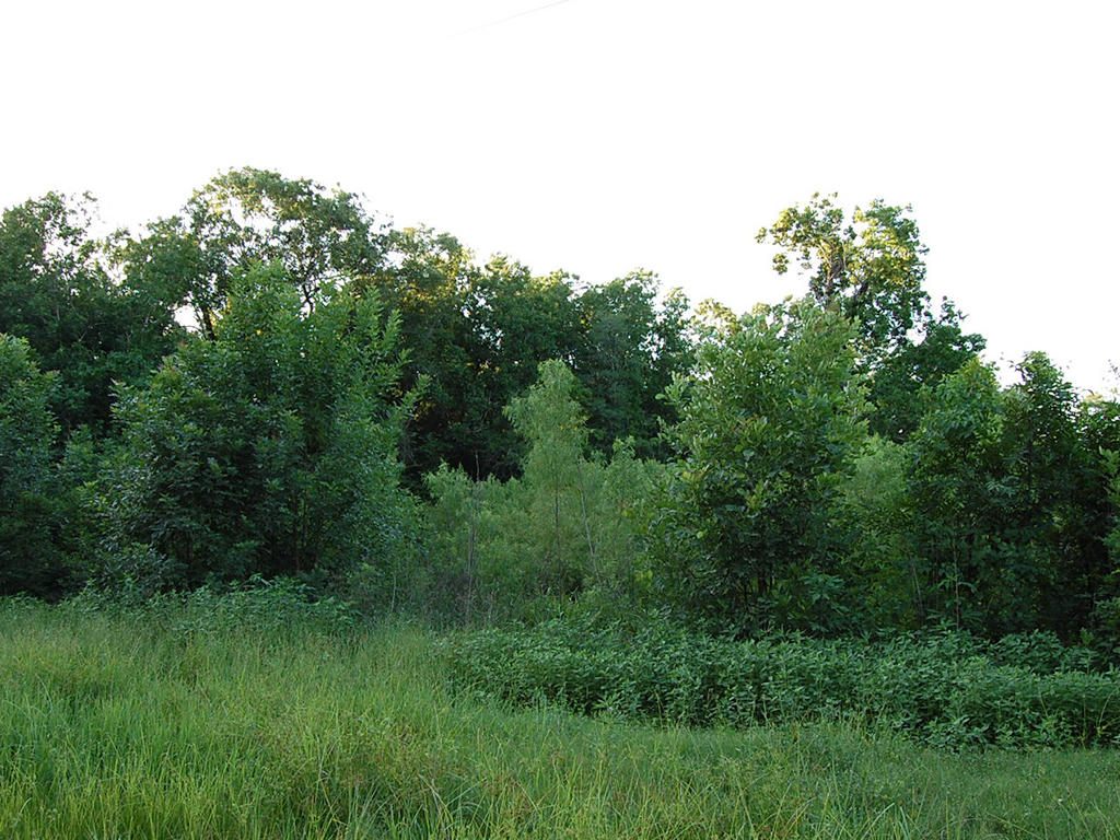Wooded Property with Power Available - Image 1