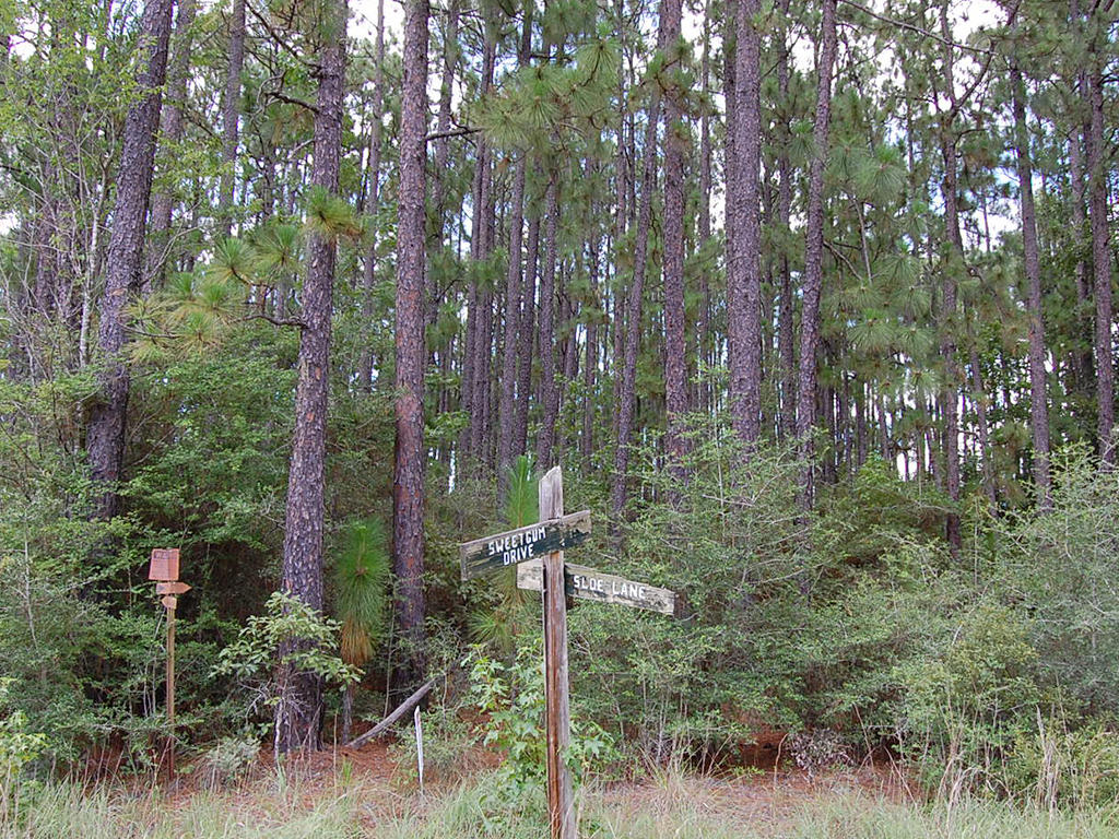 Wooded Eastern Texas Property - Image 4