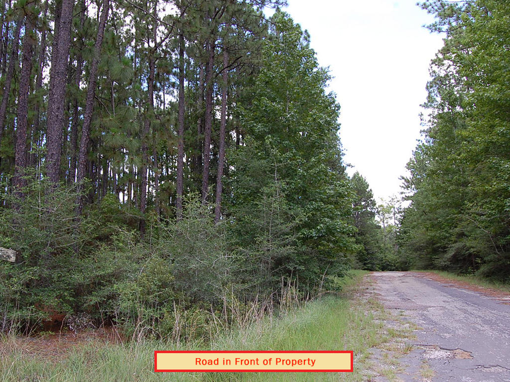 Wooded Eastern Texas Property - Image 5