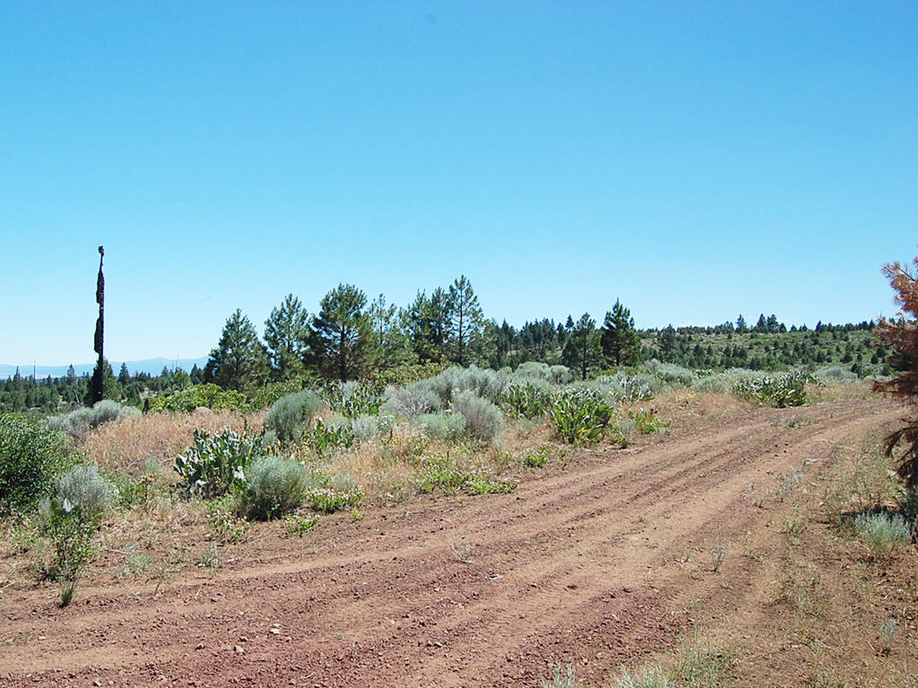 1.4 Acre Property About 30 Miles from Alturas - Image 5