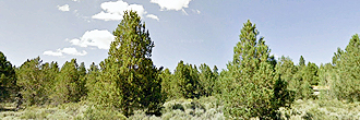 6 Acres Near Sprague River
