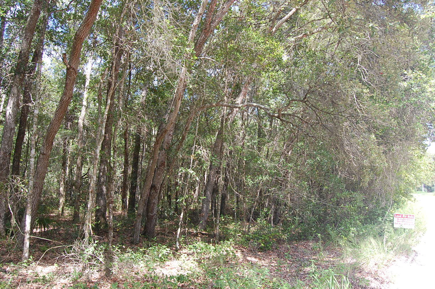 Rural 1+ Acre lot in Orange City - Image 5