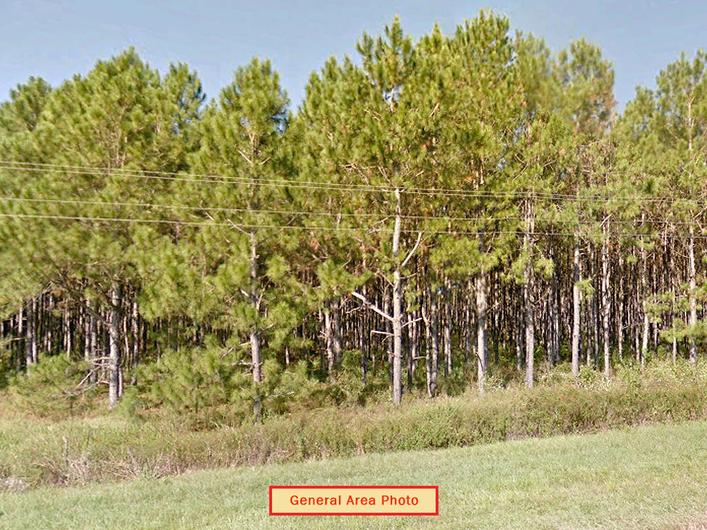 Beautiful 1 Acre in the Gateway to Florida - Image 4