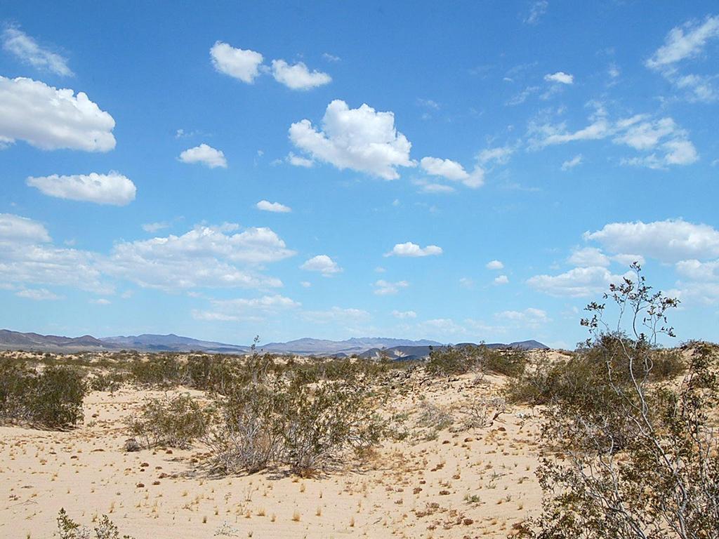 5 Acres on Gorgeous Desert Landscape - Image 5